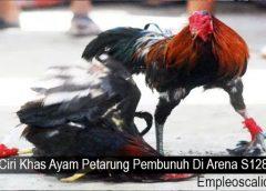 Ciri Khas Ayam Petarung Pembunuh Di Arena S128