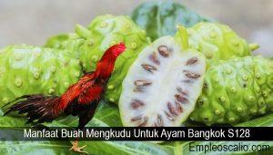 Manfaat Buah Mengkudu Untuk Ayam Bangkok S128