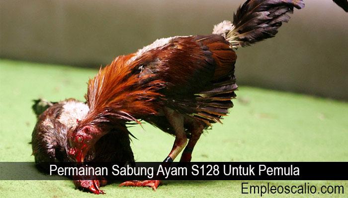 Permainan Sabung Ayam S128 Untuk Pemula